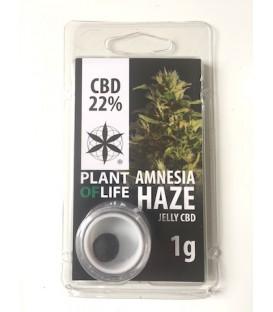 Jelly CBD 22% Critical Mass