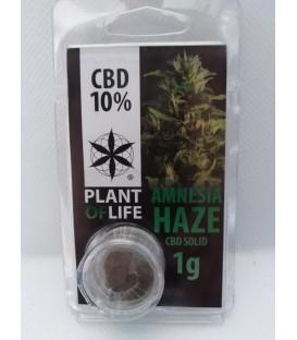 Solid CBD Amnesia Haze 10%